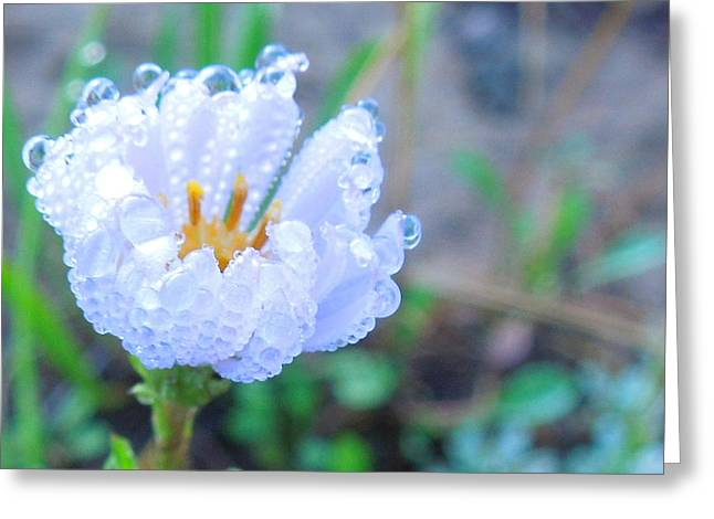 Flower Dew Drops Greeting Card