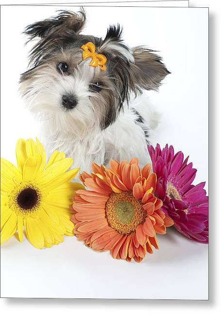 Flower Doggie Greeting Card