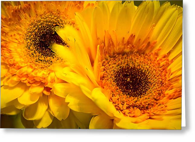 Greeting Card featuring the photograph Flower Eyes by Steven Santamour