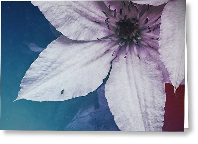 Flower Fade Greeting Card by Tommy Wallace