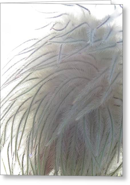 Greeting Card featuring the photograph Floral Feathers by Ramona Johnston