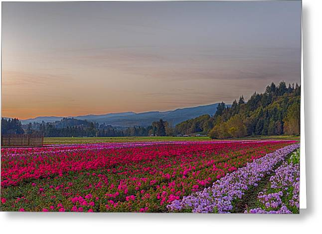 Flower Field At Sunset In A Standard Ratio Greeting Card
