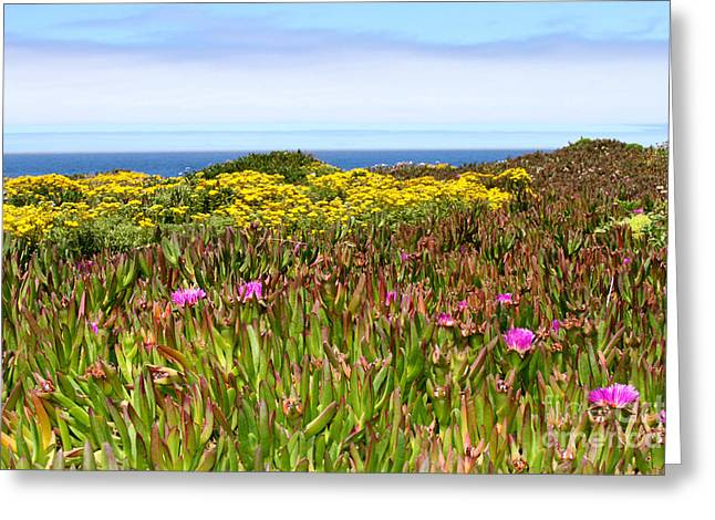 Flower Fields On The Cliffs By Diana Sainz Greeting Card by Diana Sainz