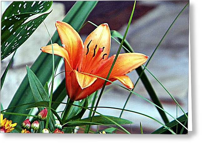Greeting Card featuring the photograph Flower Friend by Joetta Beauford