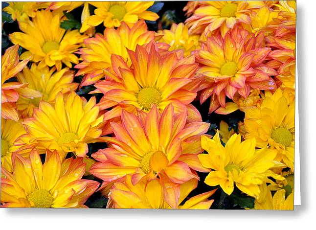 Flower  Greeting Card by Gandz Photography