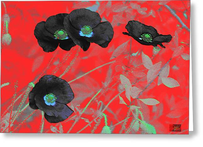 Flower Garden -  Four Black Poppies On Red Greeting Card