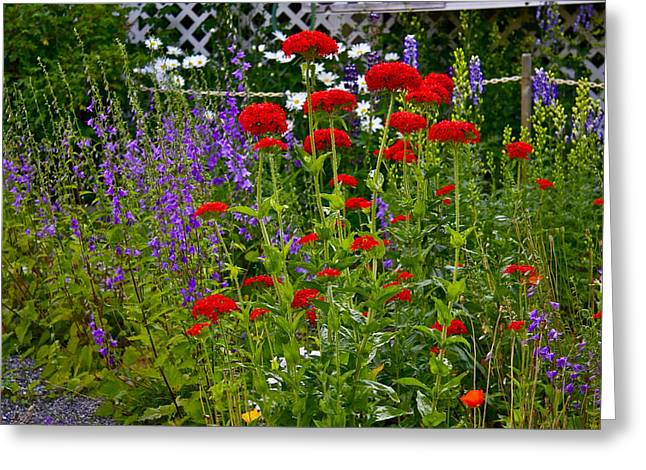 Greeting Card featuring the photograph Flower Garden by Johanna Bruwer