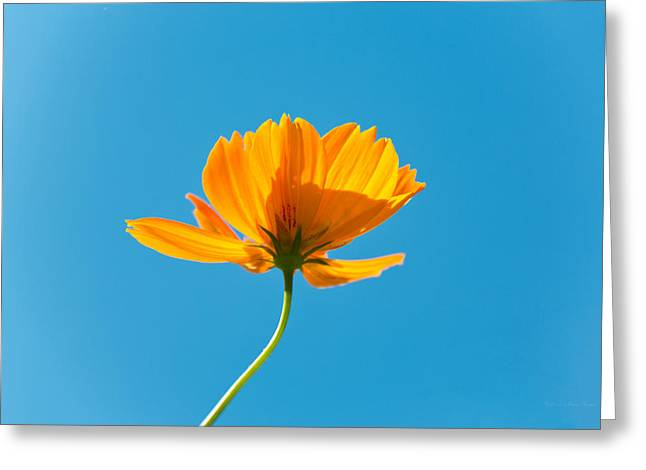 Flower - Growing Up In Brooklyn Greeting Card by Mike Savad