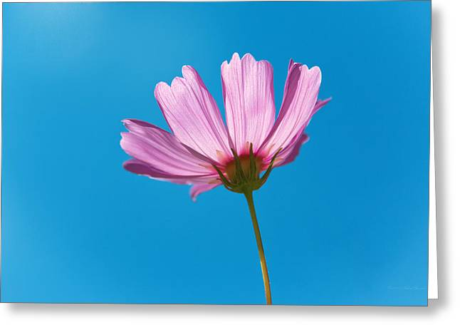 Flower - Growing Up In Philadelphia Greeting Card by Mike Savad