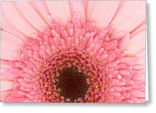 Flower - I Love Pink Greeting Card by Mike Savad