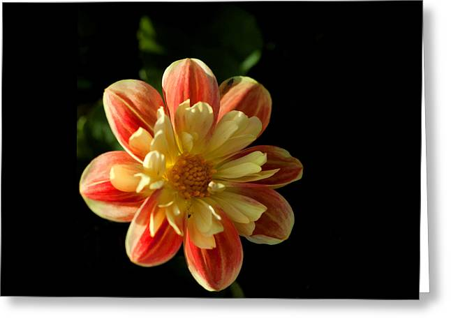 Flower In The Sun Greeting Card