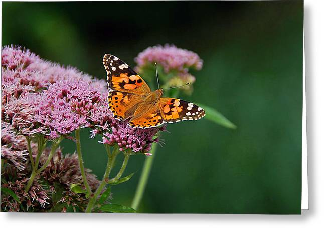 Flower Kissed By Butterfly Greeting Card by Judith Russell-Tooth