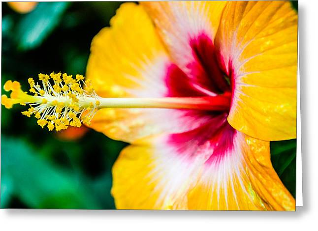 Flower Macro 2 Greeting Card by Alan Marlowe