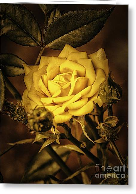 Flower Of Friendship  ... Greeting Card