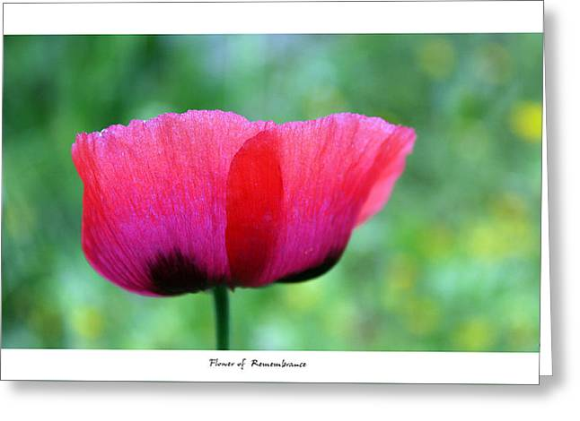 Flower Of Remembrance Greeting Card by Martina  Rathgens
