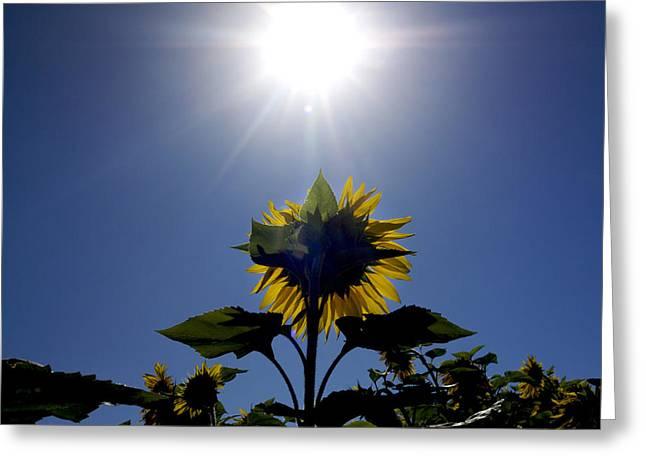 Flower Of Sunflowers Greeting Card by Bernard Jaubert
