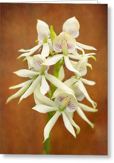 Flower - Orchid - A Gift For You  Greeting Card by Mike Savad