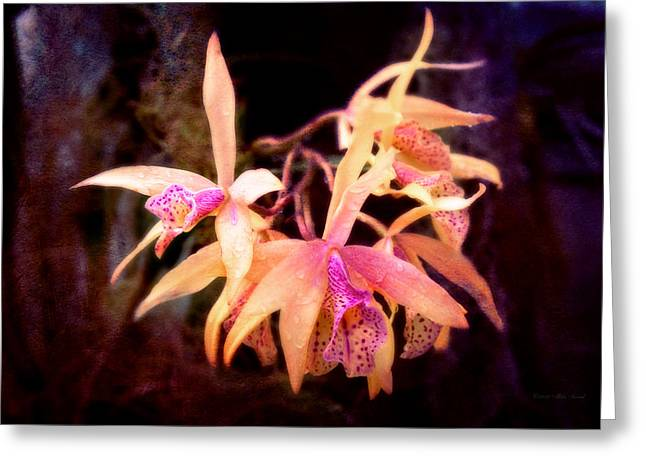 Flower - Orchid - Laelia - Midnight Passion Greeting Card by Mike Savad