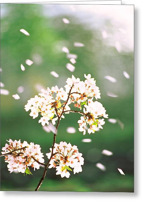 Flower Petals Floating In Air Greeting Card