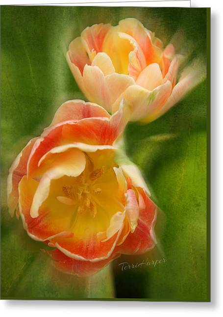 Flower Power Revisited Greeting Card by Terri Harper