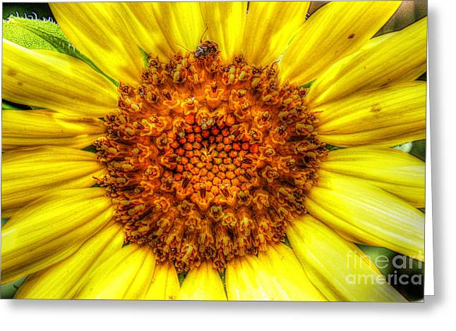 Flower Power Greeting Card by Tina  LeCour