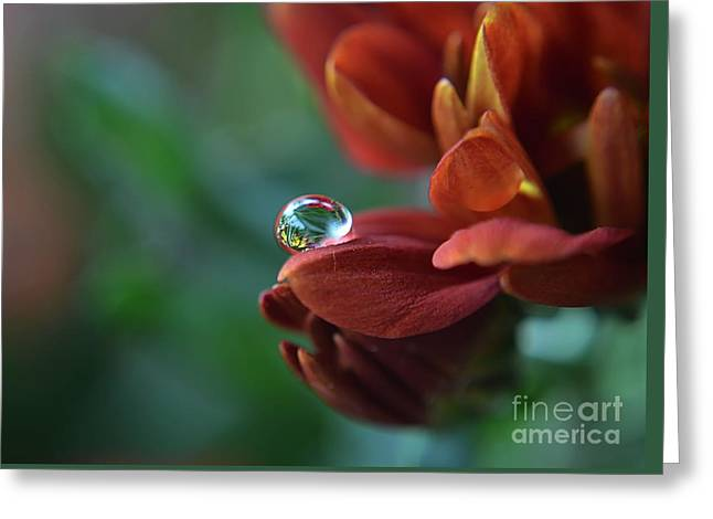 Flower Reflection Greeting Card by Michelle Meenawong