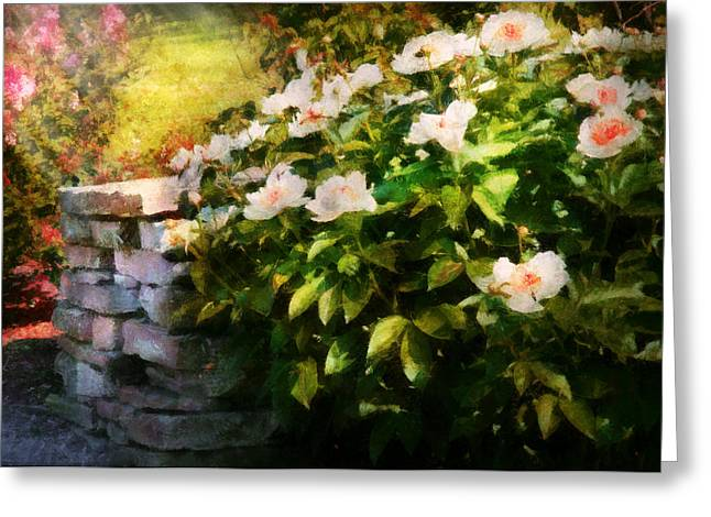 Flower - Rose - By A Wall  Greeting Card