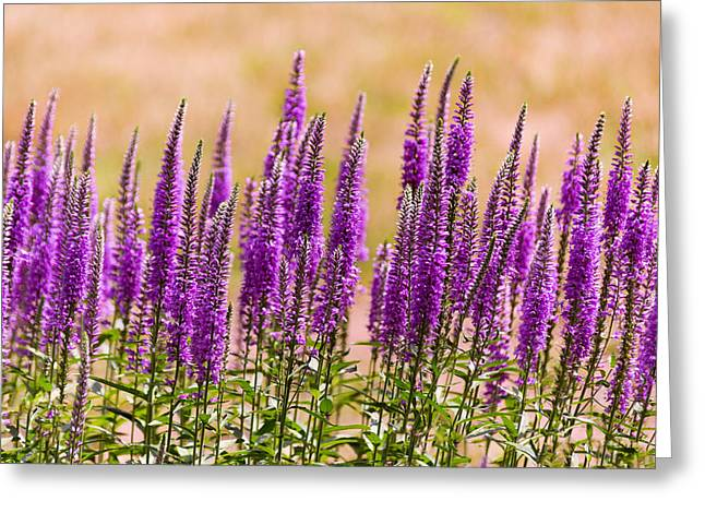 Flower - Speedwell Figwort Family - I Dream Of Lavender  Greeting Card by Mike Savad