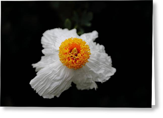 Flower Sunny Side Up Greeting Card