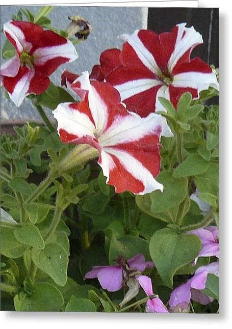 Flower Trios B Greeting Card