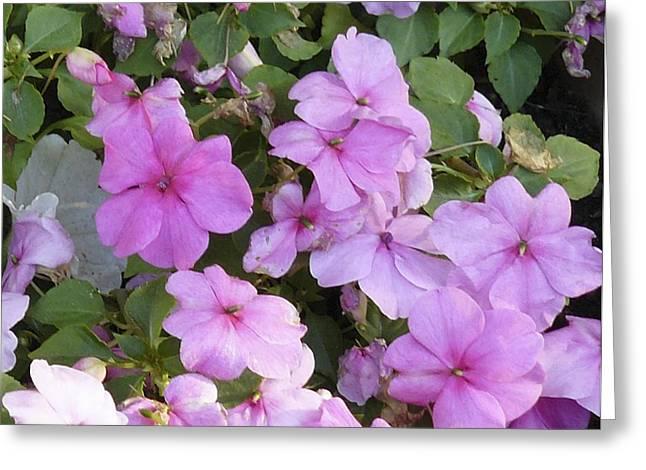 Flower Trios C Greeting Card