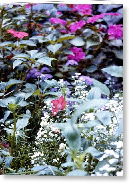 Flower Variety Garden Greeting Card