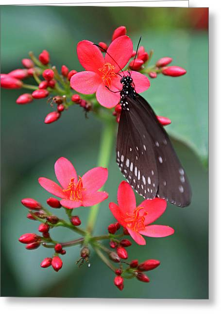 Flower With Butterfly Greeting Card by Juergen Roth