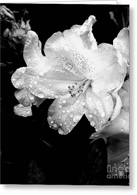 Flower With Water Drops Greeting Card