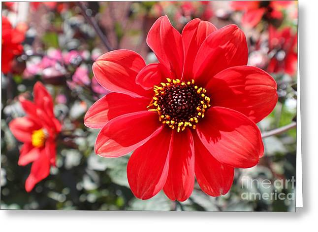 Greeting Card featuring the photograph Flower1 by Theresa Ramos-DuVon