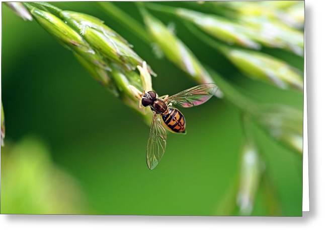 Flowerfly Greeting Card by Atchayot Rattanawan