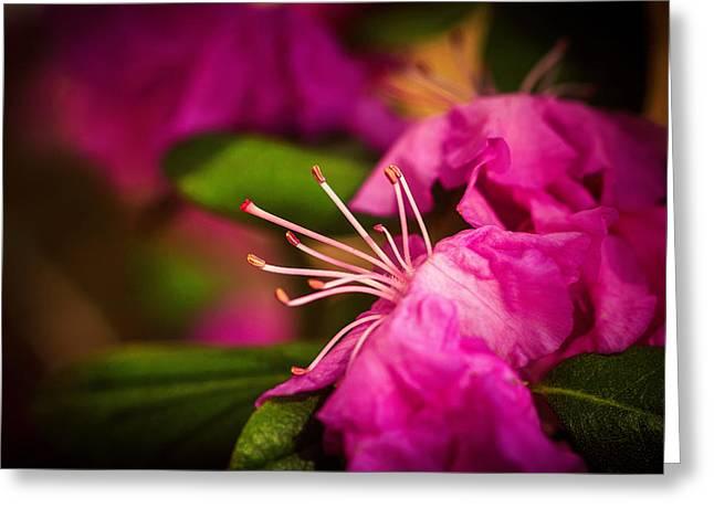 Flowering Bush Greeting Card