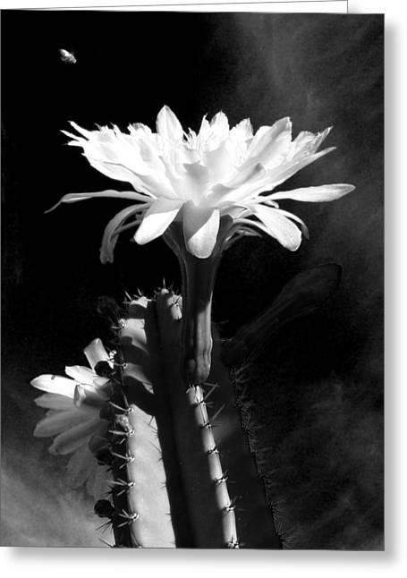 Flowering Cactus 3 Bw Greeting Card