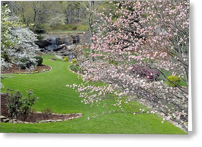 Flowering Dogwoods In Cleveland Park's Rock Quarry Falls  Greeting Card