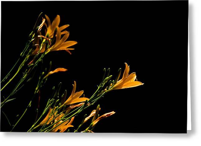 Flowering Golds II Greeting Card by Kathi Isserman