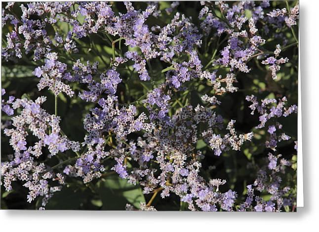 Flowering Lamsoor Greeting Card by Ronald Jansen