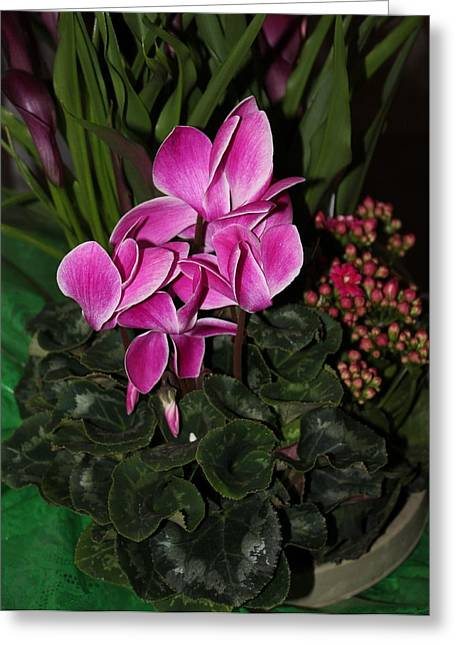 Flowering Plant Greeting Card by Cyril Maza