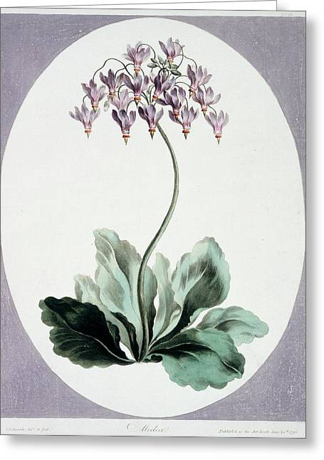 Flowering Plant Greeting Card by Natural History Museum, London/science Photo Library