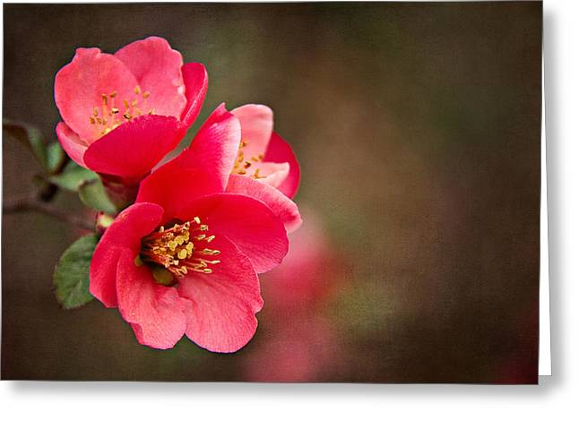 Greeting Card featuring the digital art Flowering Quince by Lana Trussell