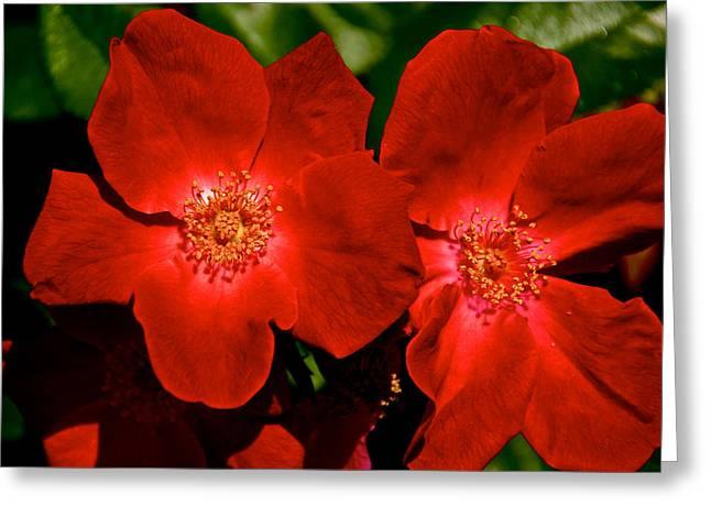 Flowering Reds Greeting Card by Kathi Isserman