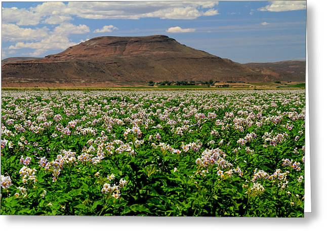 Flowering Shepody Potato Greeting Card by Ed  Riche