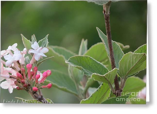 Flowering Shrub 1 Greeting Card