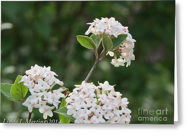 Flowering Shrub 3 Greeting Card