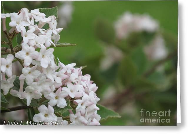 Flowering Shrub 4 Greeting Card