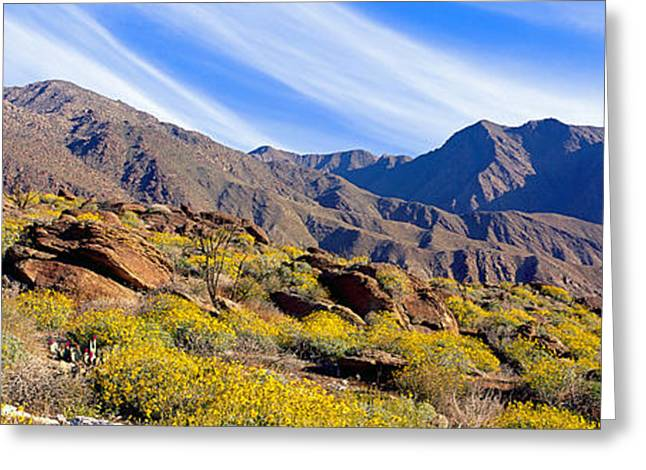 Flowering Shrubs In Anza Borrego Desert Greeting Card by Panoramic Images